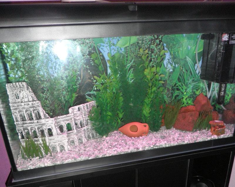 Mi acuario de 100 litros portalpez acuarios mascotas for Peces artificiales para acuarios